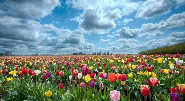 فصل بهار به انگلیسی