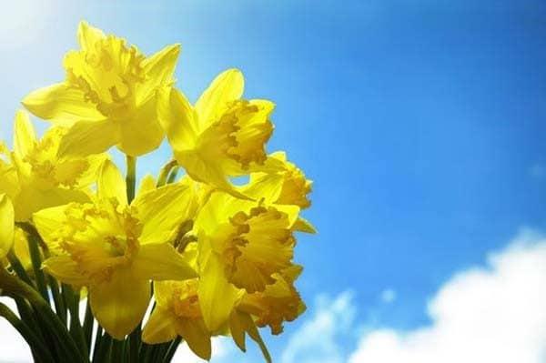 فصل بهار رضا صادقی